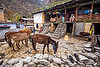 village house and horses (india), horses, house, janki chatti, mountains, people, village