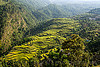 valley slope with terrace rice fields (india), agriculture, pindar valley, rice fields, rice paddy fields, slope, terrace farming, terrace fields