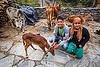 young couple with calf (india), baby cow, calf, cows, janki chatti, people, rope