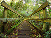 foot-bridge - mossy (steep ravine canyon, san francisco bay area)