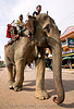 elephant riding - vang vieng (laos), asian elephant, elephant riding, mahout, man, street, vang vieng
