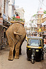 elephant and auto-rickshaw