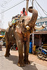 elephant in the street (india)