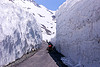 snow walls near baralacha pass - manali to leh road (india)