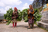 two women carrying leaves - jalori pass (india)