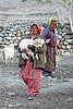 farmer with baby goat - pangong lake - ladakh (india)