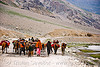 zojila pass - nomads with horses - drass valley - leh to srinagar road - kashmir