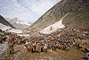 ponies and porters - amarnath yatra (pilgrimage) - kashmir