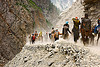pilgrims and ponies on dusty trail - amarnath yatra (pilgrimage) - kashmir