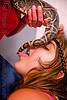 pet boa snake - tail licking
