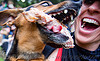 crazy dog with bone - hound, bone, dirty bird party, dog, hound, mouth, raw meat, teeth, woman