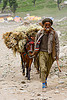 pony-man and his pony with a load of hay - amarnath yatra (pilgrimage) - kashmir