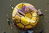 foating trash - football - soccer ball, buenos aires, environment, floating, football, garbage, la boca, pollution, riachuelo, rubbish, río la matanza, río matanza, soccer ball, trash, water