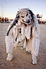 white wolf costume, burning man, mask, taxidermed, taxidermied, taxidermy, white wolf, wolf costume