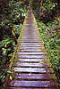 walkway in the jungle (borneo)