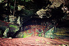 huge chamber in natural cave (borneo)