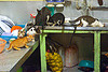 kittens doing the dishes, cats, dishes, kitchen, kittens, mackerel tabby