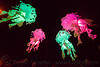 glowing jellyfishes - billion jelly bloom