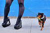 high heel platform shoes and little dog, black stockings, black tights, blue wall, dog collar, dog leash, eclair acuda bandersnatch, flower, glitter, high heel shoes, legs, little dog, pearls, platform shoes, san franciscopeople, small dog, woman