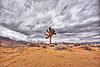 joshua tree - california desert, clouds, cloudy sky, death valley, desert, joshua tree, sand, yucca brevifolia
