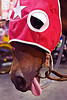 draft horse sticking out tongue, bridle, draft horse, draught horse, horse hood, horse mask, java, jogja, jogjakarta, malioboro, night, red, sticking out tongue, sticking tongue out, street, yogyakarta