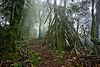 foggy trail in rainforest