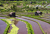 flooded paddy fields, agriculture, bali, flooded, huts, rice fields, rice paddy fields, terrace farming, water