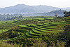 rice paddies terraces - flores (indonesia), agriculture, flores island, indonesia, rice paddies, rice paddy fields, terrace farming, terraced fields