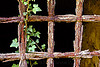 rusty grate with ivy, black background, dark, fortifications, grate bars, green, hedera helix, iron grate, ivy leaves, military fort, old fortification, plant, rocca d'anfo, ruins, rust texture, rusted grate, rusty