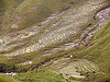 rice fields - terrace farming - vietnam, agriculture, rice fields, rice paddy fields, sapa, terrace farming