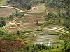rice fields - terrace farming - between Tám Sơn and Yên minh - vietnam