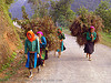 tribe girls carrying huge bundles of grass on the road - vietnam, asian woman, asian women, backpacks, green hmong, hill tribes, hmong tribe, indigenous, road, tribe girls