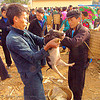 man checking piglet at the market - vietnam, hill tribes, indigenous, market, men, mèo vạc, pig, piglet, small