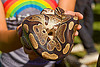 holding a coiled python pet snake, coiled snake, curled, dolores park, gay pride festival, hands, holding, pet snake, python, rainbow colors, reptile, wildlife