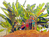 kids and banana trees - vietnam, children, green, hill tribes, indigenous, kids