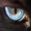 cat eye - blue - siamese