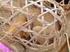 puppy in cage, bamboo cage, cao bang, cao bằng, dog, market, puppy