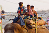 kids riding elephant (india), asian elephant, boys, children, elephant riding, kids, kumbha mela, maha kumbh mela, mahout, man, street