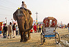 elephant and cycle rickshaw (india), asian elephant, cycle rickshaw, elephant riding, elephant trump, kumbha mela, maha kumbh mela, mahout, man, street